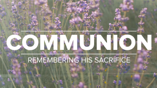 Lavender Communion