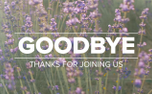 Lavender Goodbye (97524)