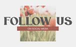 Poppy Social (97564)