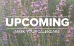Lavender Upcoming (97679)