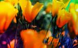 HMD Background (97705)