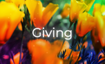 HMD Giving (97706)