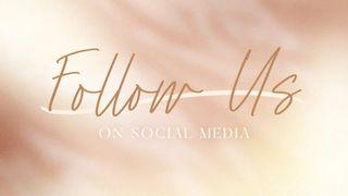 Blush Shimmer : Follow Us