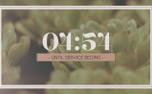 Succulents Countdown (97769)