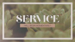 Succulents Service