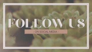 Succulents Social