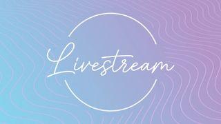 Lavender Waves : Livestream