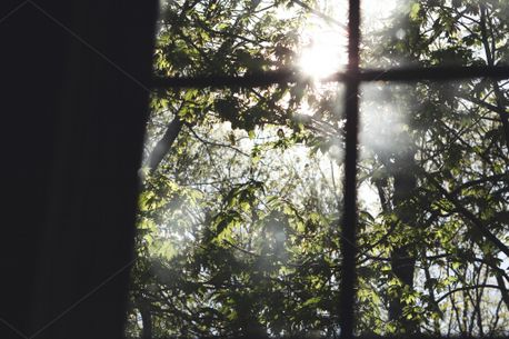Sunlit Window Panes (98015)