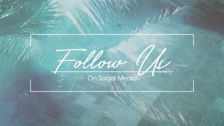 Pool Palms Social