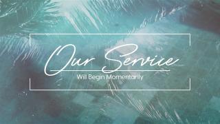 Pool Palms Service