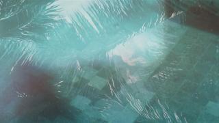 Pool Palms Background Loop