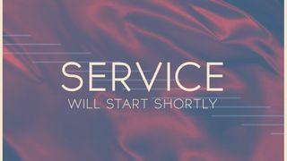 Dedicated Blue : Service