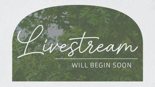 Oak Grove : Livestream