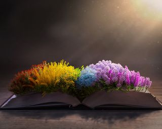 Colorful flowers on the Bible