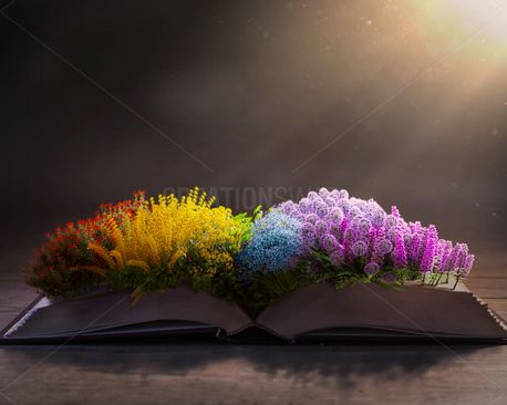 Colorful flowers on the Bible (98744)