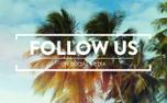 Summer Palms Social (99096)