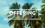 Summer Palms Offering (99098)
