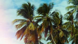 Summer Palms Background Loop