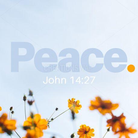 Peace Social media Pack (99221)