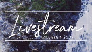 Rocky Falls : Livestream