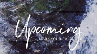 Rocky Falls : Upcoming