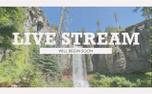 Vintage Waterfall Live Stream (99600)
